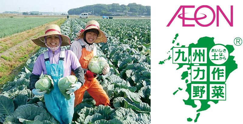 力作野菜として販売されるキャベツの収穫
